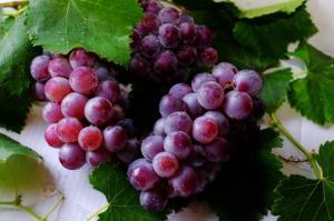 რატომ არის ყურძენი საუკეთესო ხილი?