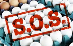 დაივიწყეთ ყველაფერი, რაც აქამდე კვერცხის შესახებ გსმენიათ – მეცნიერებმა კვლევის ახალი შედეგი გამოაქვეყნეს