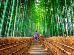 19 ულამაზესი ტყე  მსოფლიოში, რომელსაც უნდა ეწვიო ვიდრე ცოცხალი ხარ (ფოტოები)