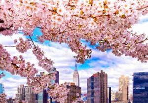 გაზაფხულის ზღაპრული ფოტოები ნიუ-იორკიდან  - ბუნებისა და არქიტექტურის ჰარმონიული შერწყმა