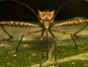 როგორი სისხლი იზიდავთ კოღოებს