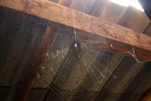 ეზოთერიკული ახნსა: რატომ ჩნდება სახლში ტარაკანა, ჭიანჭველა, ობობა, ფუტკარი ან თაგვი?