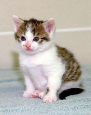 პირველი კლონირებული კატა, რომელიც ძალიან ლამაზი დაიბადა