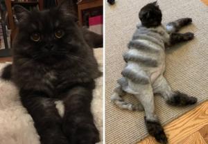 რა ხდება როდესაც კატა მამას მიჰყავს გრუმერთან