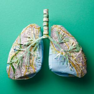 ქაღალდის რუკისგან შექმნილი ადამიანის  ორგანოები