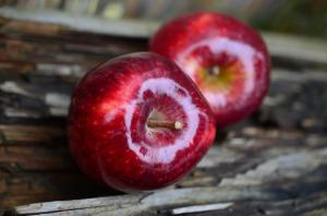 ვაშლის დიეტა-უნიკალური საშუალება მათთვის ვისაც წონაში  სწრაფი კლება სურს