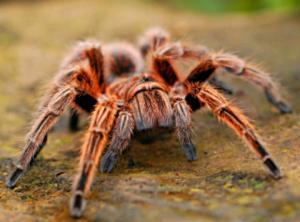 10 საინტერესო ფაქტი ცხოველების შესახებ (ნაწილი 4)