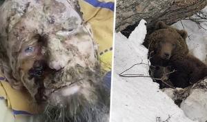 ხერხემალგადატეხილი მამაკაცი ერთი თვე  დათვს ყავდა ბუნაგში და  გადარჩა