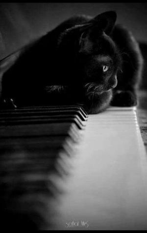 არიან თუ არა შავი კატები მართლა ავი სულები?