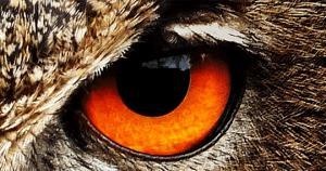 თქვენ ნამდვილი ზოოლოგი ხართ, თუ ამ 10 ცხოველს მხოლოდ თვალებით გამოიცნობთ