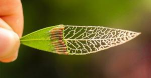 ბუნება არასდროს წყვეტს ჩვენს გაოცებას - ფოტოკრებული