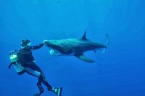 მართალია, რომ ზვიგენს ადამიანის გემო არ მოსწონს?