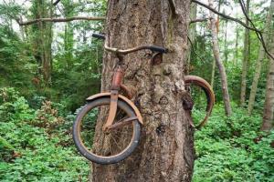 რა  საიდუმლოს მალავს ხეში ჩაზრდილი  ველოსიპედი?-  ლეგენდა ცნობილი ფოტოსურათის შესახებ