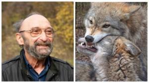 იასონ ბადრიძე-ორი წელი მგლებთან ერთად ველურ ბუნებაში