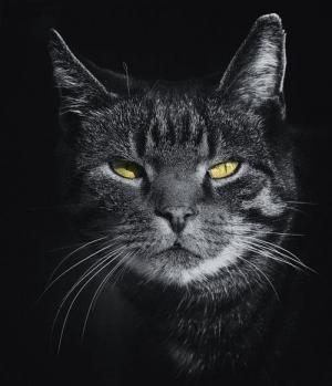 თუ სახლში კატა გყავთ, თქვენ სექსუალური გადახრა გაქვთ! მეცნიერების ახალი აღმოჩენა