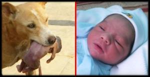 ბრაზილიაში ძაღლმა ახალშობილი გადაარჩინა, რომელიც დედამ ნაგავში გადააგდო