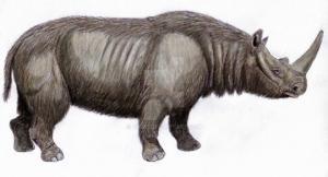 მსოფლიოში უძველესი ცხოველის დნმ, რომლის გაშიფვრაც სრულად მოხერხდა, დმანისიდანაა