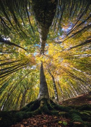 იტალიელმა ფოტოგრაფმა ტყის შუაგულში მომაჯადოებელი ფოტოები გადაიღო