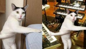 დაბნეული კატა ინტერნეტ-ვარსკვლავი გახდა (სახალისო ფოტოები)