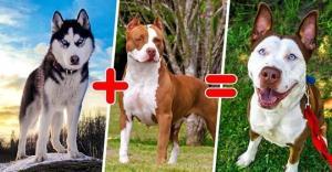როგორ გამოიყურებიან შეჯვარებული ძაღლები - ფოტოკრებული