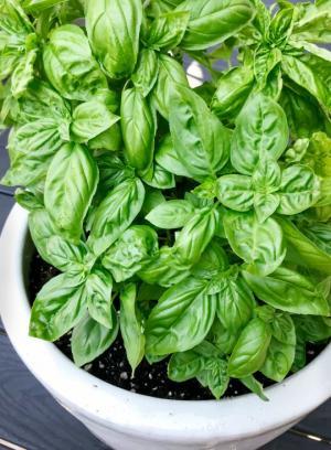 9 სამკურნალო მცენარე რომელიც სახლში აუცილებლად უნდა გქონდეთ