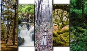 ცნობილ ტყეებში მომხდარი საშინელი ისტორიები