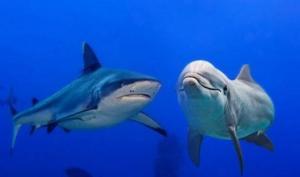 ვამსხვრევთ მითებს  ზვიგენების, პირანიების და დელფინების შესახებ