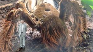 რომელია ყველაზე დიდი, შხამიანი და სწრაფი? - 7 სახეობის ობობა, რომელიც აუცილებლად უნდა იცოდეთ!