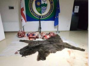 წითელ ნუსხაში შეტანილი მურა დათვი მოკლეს