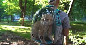გამჭვირვალე ზურგჩანთა კატებისთვის - ახალი ტრენდი ფუმფულა ცხოველების მოყვარულებს შორის