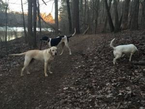 ფეხმძიმე ქალი ტყეში ძაღლის გასეირნების დროს ძაღლებმა მოკლეს