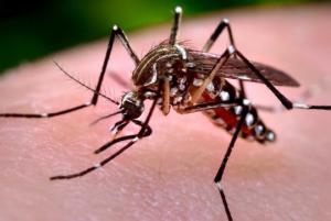 ამერიკაში კოღომ 13 ადამიანი მოკლა