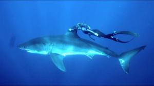 გოგონას ცურვამ მტაცებელი ზვიგენის გვერდით ინტერნეტი ააფეთქა(ვიდეო)