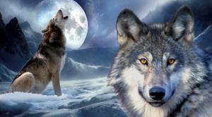 მგელი კანონს არ დაარღვევს მოკვდება ყველაფერი მგლის შესახებ