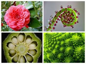 ბუნების  გეომეტრია: საოცრად   სიმეტრიული და  ჰარმონიული  ფორმის  მცენარეები