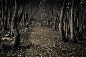 5 ყველაზე იდუმალი ტყე დედამიწაზე