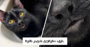 კატები, რომლებიც ბუნებამ განსაკუთრებული ნიშნით დააჯილდოვა