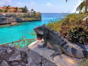 ექვსი საინტერესო ფაქტი კურასაუს შესახებ და მისი ხუთი გამორჩეულად ლამაზი სანაპირო