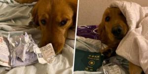 ძაღლმა ქალი  ჩინური კორონავირუსისგან გადაარჩინა