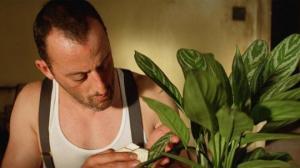 როგორ უნდა გაწმინდოთ ოთახის მცენარეების ფოთლები სწორად - სასარგებლო რჩევები
