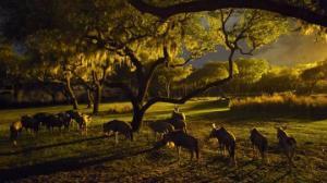 გარეული ცხოველები მხოლოდ ღამით აქტიურობენ, რათა ადამიანებთან კონტაქტი თავიდან აიცილონ