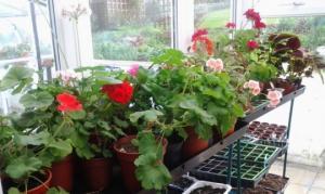 მწვანე აფთიაქი ფანჯრის რაფაზე – მცენარეები, რომლებიც ყველა სახლში  უნდა იყოს