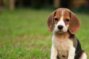 კვლევა: რატომ არის ძალიან ცუდი, როცა ძაღლს უყვირი და სჯი