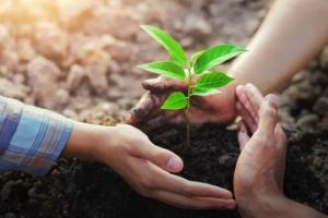 რატომ უნდა დავრგოთ ხეები
