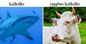 16 ფაქტი ცხოველების შესახებ, რომელიც ზოოლოგებმაც არ იციან