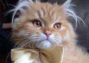 15 საოცარი და სახალისო ფაქტი კატების შესახებ