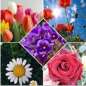 რომელია თქვენი საყვარელი ყვავილი?