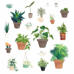 რომელი ოთახის მცენარე დაგიცავთ ავი თვალისგან, უბედურებისა და დაავადებებისგან?