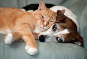 """""""ურემი როცა გადაბრუნდება.."""" - ჩინეთში აკრძალეს ძაღლების, კატების და ღამურების საკვებად გამოყენება"""