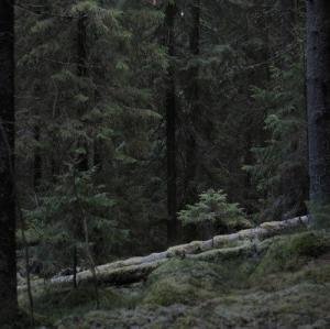 """""""ქალი,რომელიც ტყეში მარტო ცხოვრობს"""" - დაიან ფოსი"""